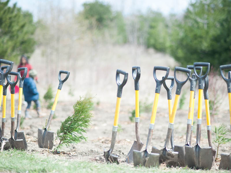 50 Million Trees - Tree Planting Event